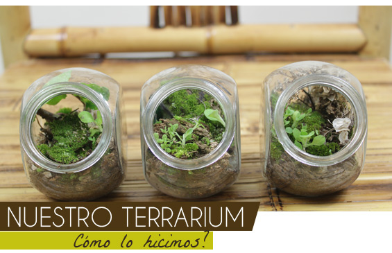 Terrarium-tutorial2